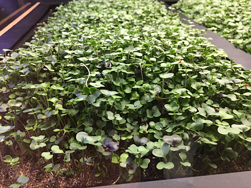 Vegetable Garden at Great Northern Food Hall, Grand Central, NYC