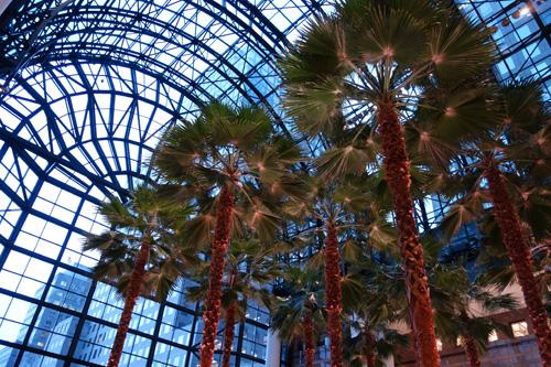 Palm Trees, Bloomfield Place Atrium, NYC 2018